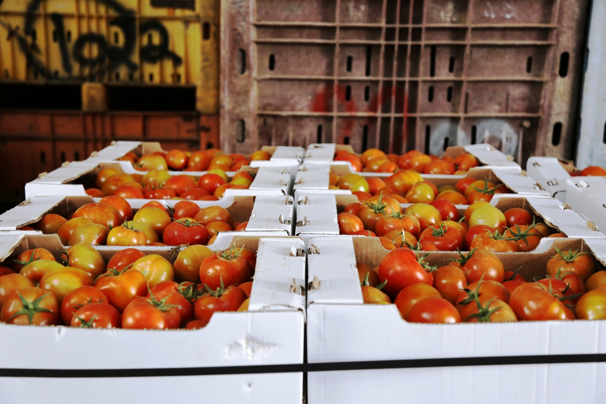 The first shipment of Gaza tomatoes to be sold in Israel following an 8-year ban. March 2015. Photo by Gisha