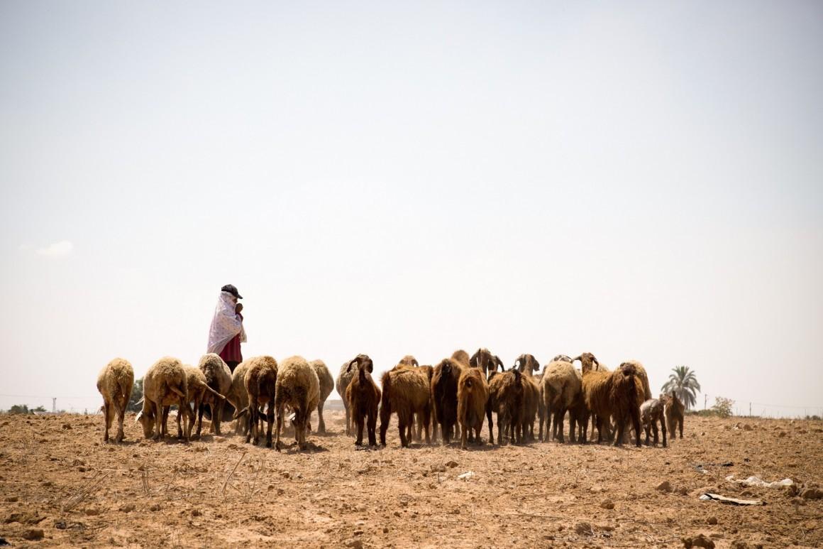 """نجية الملالحة ترعى أغنامها في المنطقة العازلة، حزيران 2018. تصوير """"ﭼيشاه – مسلك"""""""